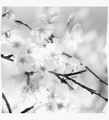 Cherry blossoms - monochrome Poster