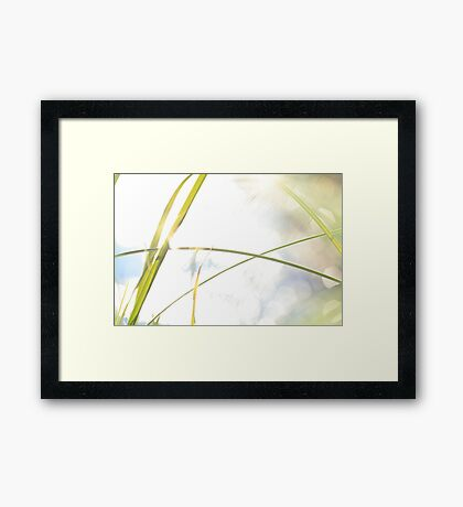 Blades of grass and sun reflections Framed Print