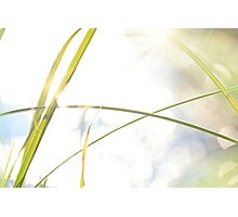 Blades of grass and sun reflections Photographic Print