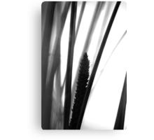 Flowering grass - monochrome Canvas Print