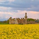 Duckets Grove by Michael Walsh