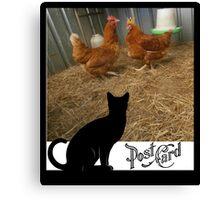 domestic hen Canvas Print