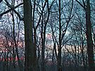 Woodland Sunset by MotherNature