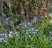 Agapanthus Africanus Flowers by Matthew Hockley