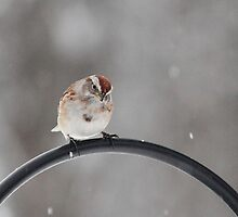 Snowing Again! by Rose Landry
