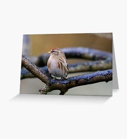Lesser redpoll, County Kilkenny, Ireland Greeting Card