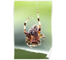 The Ittsy Bittsy Spider Poster