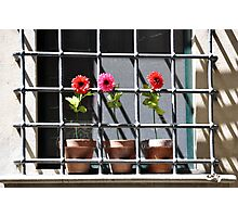 Behind Bars Photographic Print