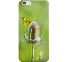 Yellow Sulfur Butterfly Feeding iPhone Case/Skin