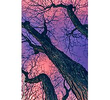Red Skies Photographic Print