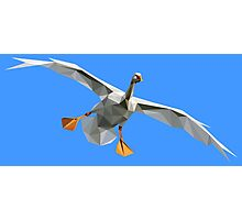 Goofy Bird Photographic Print