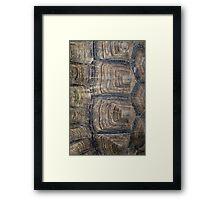 Tortoise Shell Framed Print