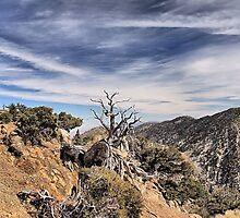 Sky Meets Mountain Peaks by Rosalee Lustig