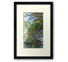 ©MS- GS In The Forest IAc Framed Print