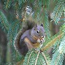 Squirrel by Ronda Sliter
