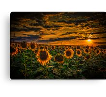 Sunflowers field landscape Canvas Print
