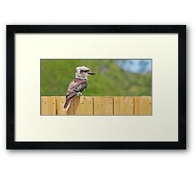 Kooka On The Fence Framed Print