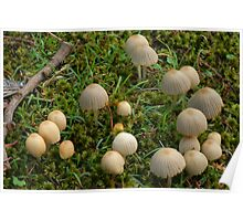 Forest parasols Poster