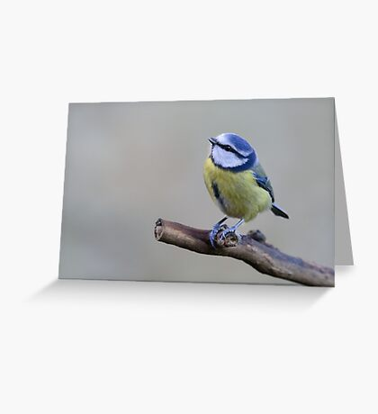 Blue tit, County Kilkenny, Ireland Greeting Card