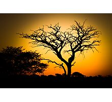 Tree silhouetted against African sunset Photographic Print