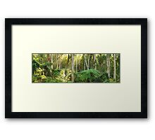 Dawn Lights The Dandenongs, Australia Framed Print