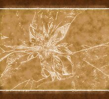 Pale Yellow Poinsettia 1 Outlined Brown by Christopher Johnson