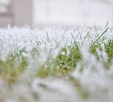 Frosty Morning by May92