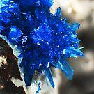 Blue Star Of India (Pentagonite) by Stephanie Bateman-Graham