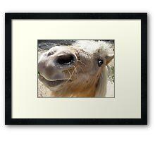 Miniature Shetland Pony Framed Print