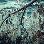 Icy Branch by Ari Salmela