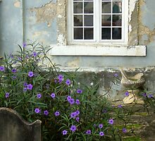 Out of Decay Springs Forth Beauty by Barb Baetz