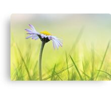Longing for Spring... Canvas Print