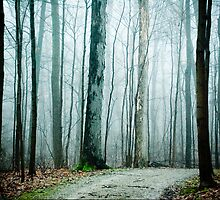 Pathway Into Fog by Olivia Joy StClaire