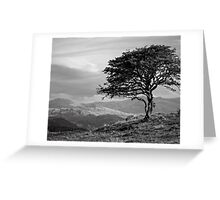 The tree Bilbo left behind looking out to the lonely mountains on a winter's late afternoon. Greeting Card