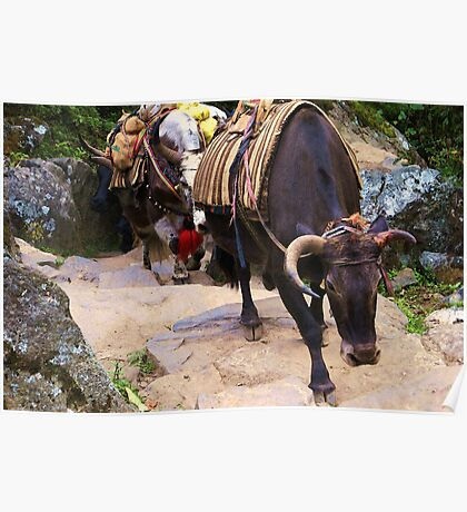 Yak on the Everest Trail #2 Poster