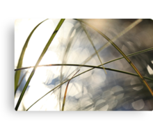 Grasses and sun reflections on a lake Canvas Print