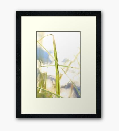 Green grass in golden light Framed Print