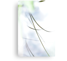 Grasses reflected in a quiet lake Canvas Print