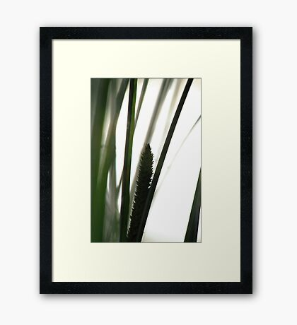 Silhouette of flowering grass Framed Print