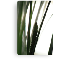 Silhouette of flowering grass Canvas Print