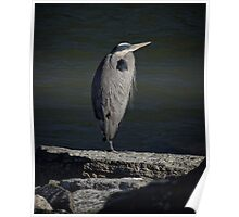 This Heron is in the Spotlight Poster