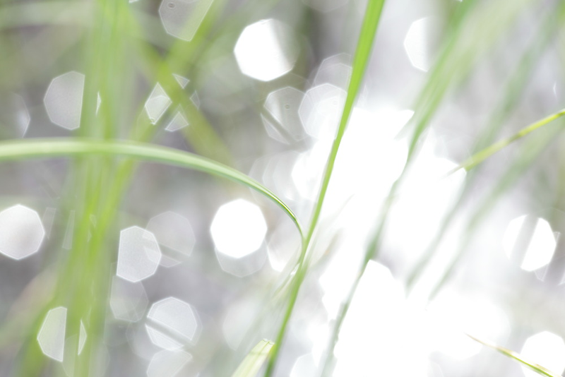 Green grass and sun reflections by intensivelight