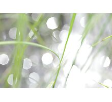 Green grass and sun reflections Photographic Print