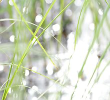 Green grasses and sun reflections on a lake by intensivelight