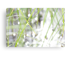 Green grasses and sun reflections on a lake Canvas Print