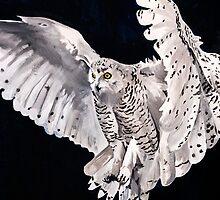 SNOW OWL.... by buddybetsy