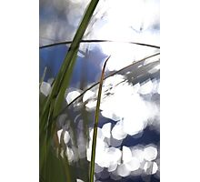 Grasses at the shore of a glittering lake Photographic Print