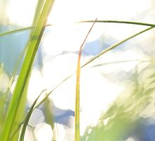 Grasses at the shore of a lake bathing in golden light by intensivelight
