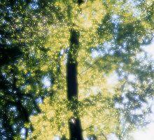Beech forest in spring - dreamlike by intensivelight