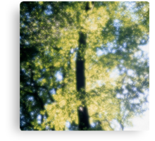 Beech forest in spring - dreamlike Canvas Print